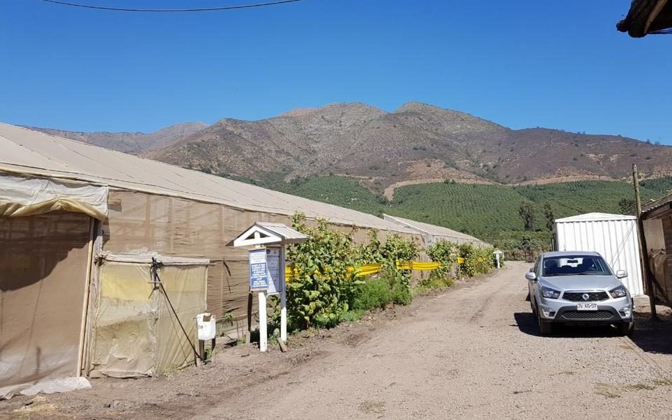 חווה לגידול עגבניות צ'ילה