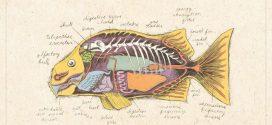 דג בבל תוצרת סין