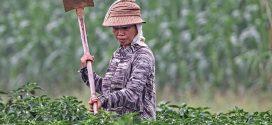 זרקור על אירועים חקלאיים מרכזיים בדרום-מערב סין בשנת 2018