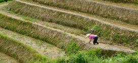 העיקר, להיחשף לאיכר – במפגש עם משרד החקלאות של גואנדונג