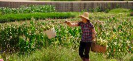 מחפשים את ההזדמנות הבאה שלכם בתחום החקלאות? בואו לדרום-מערב סין!