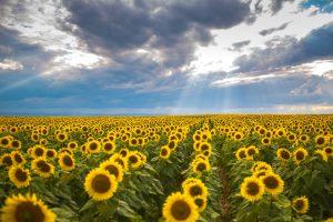 Summer in Romania