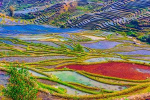 From above view on rice terraces in Yunnan province of China flooded with water growing rise